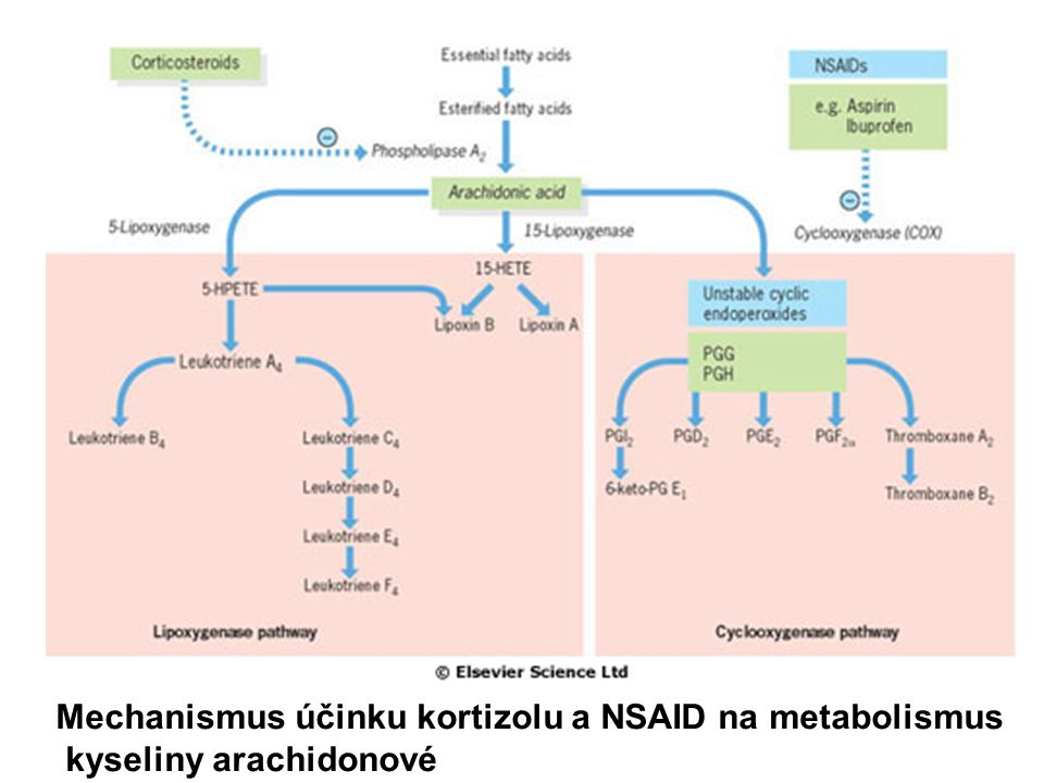 Mechanismus účinku kortizolu a NSAID na metabolismus