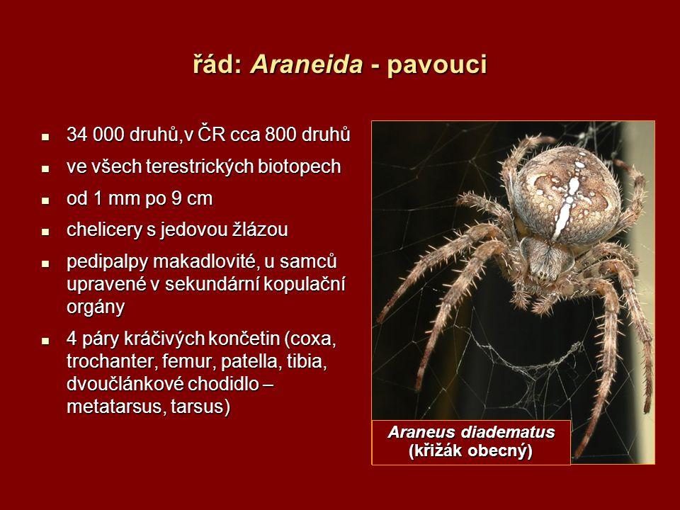 řád: Araneida - pavouci