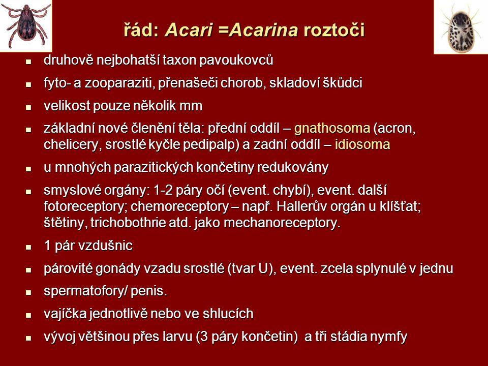 řád: Acari =Acarina roztoči