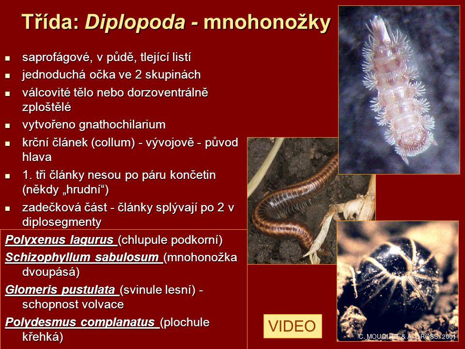 Třída: Diplopoda - mnohonožky