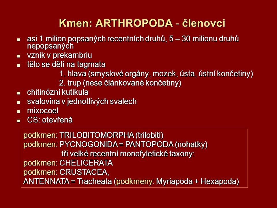 Kmen: ARTHROPODA - členovci