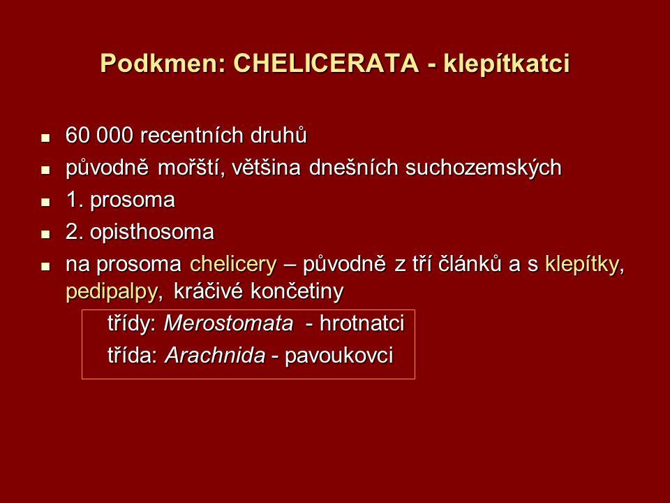 Podkmen: CHELICERATA - klepítkatci