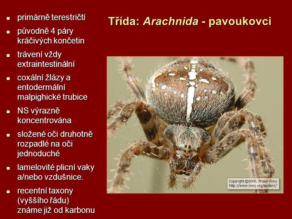 Třída: Arachnida - pavoukovci