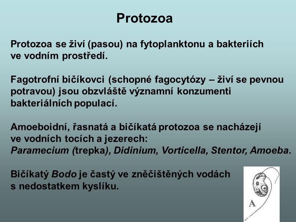Protozoa Protozoa se živí (pasou) na fytoplanktonu a bakteriích