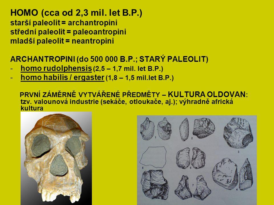 HOMO (cca od 2,3 mil. let B.P.) starší paleolit = archantropini