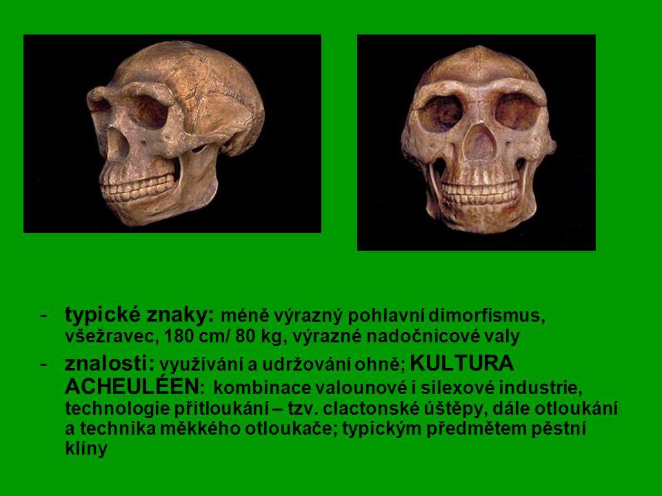 typické znaky: méně výrazný pohlavní dimorfismus, všežravec, 180 cm/ 80 kg, výrazné nadočnicové valy