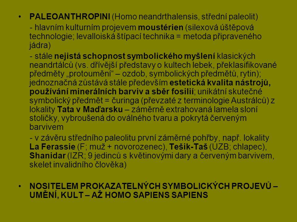 PALEOANTHROPINI (Homo neandrthalensis, střední paleolit)