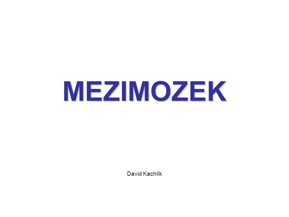 MEZIMOZEK David Kachlík