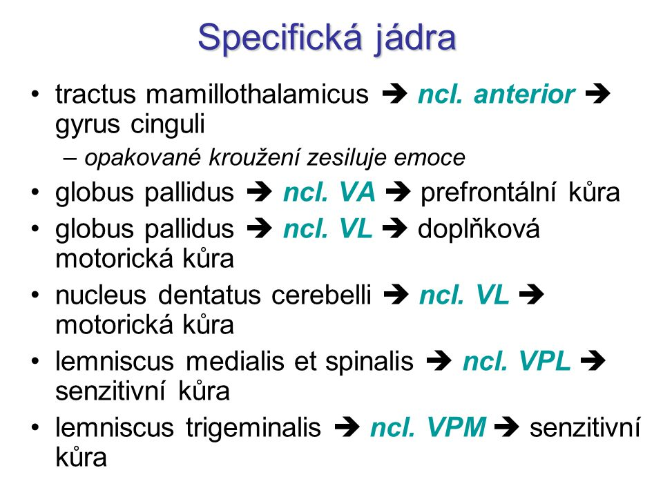 Specifická jádra tractus mamillothalamicus  ncl. anterior  gyrus cinguli. opakované kroužení zesiluje emoce.