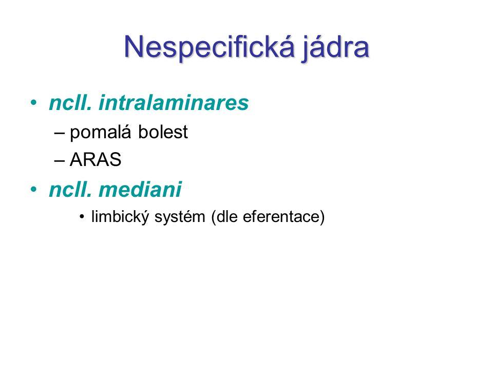 Nespecifická jádra ncll. intralaminares ncll. mediani pomalá bolest