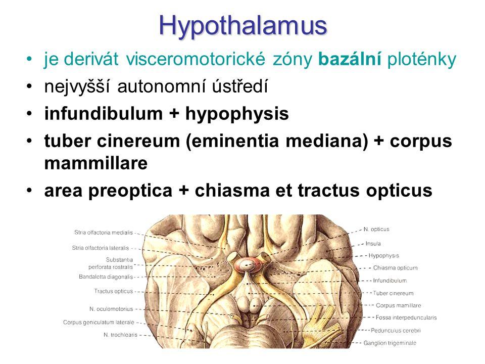 Hypothalamus je derivát visceromotorické zóny bazální ploténky