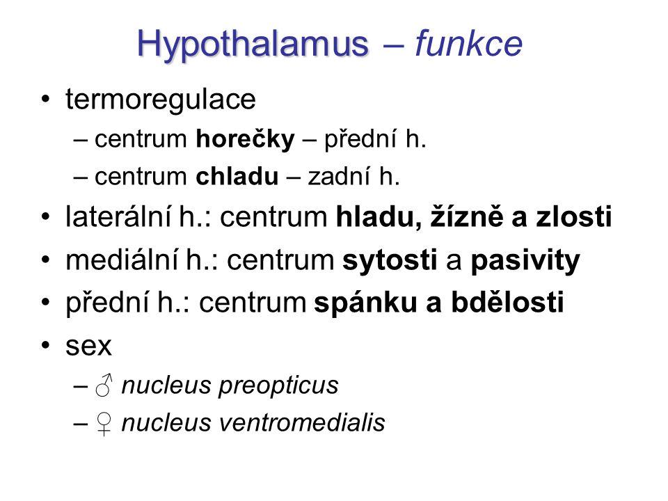 Hypothalamus – funkce termoregulace