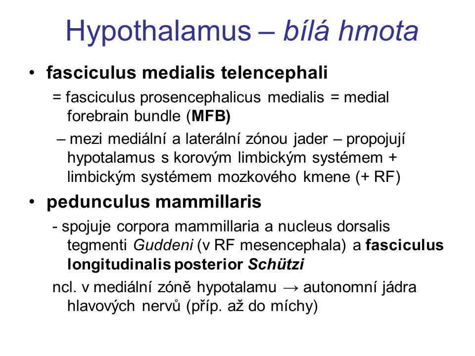 Hypothalamus – bílá hmota