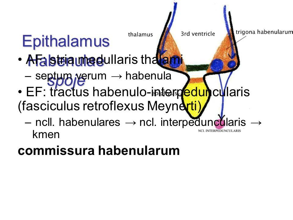 Epithalamus Habenulae spoje