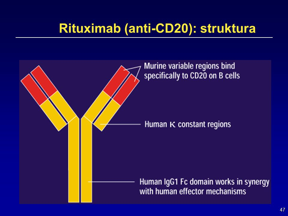 Rituximab (anti-CD20): struktura