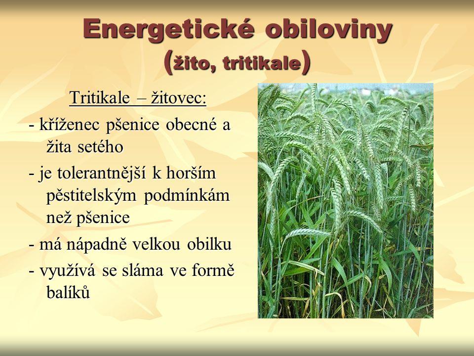 Energetické obiloviny (žito, tritikale)