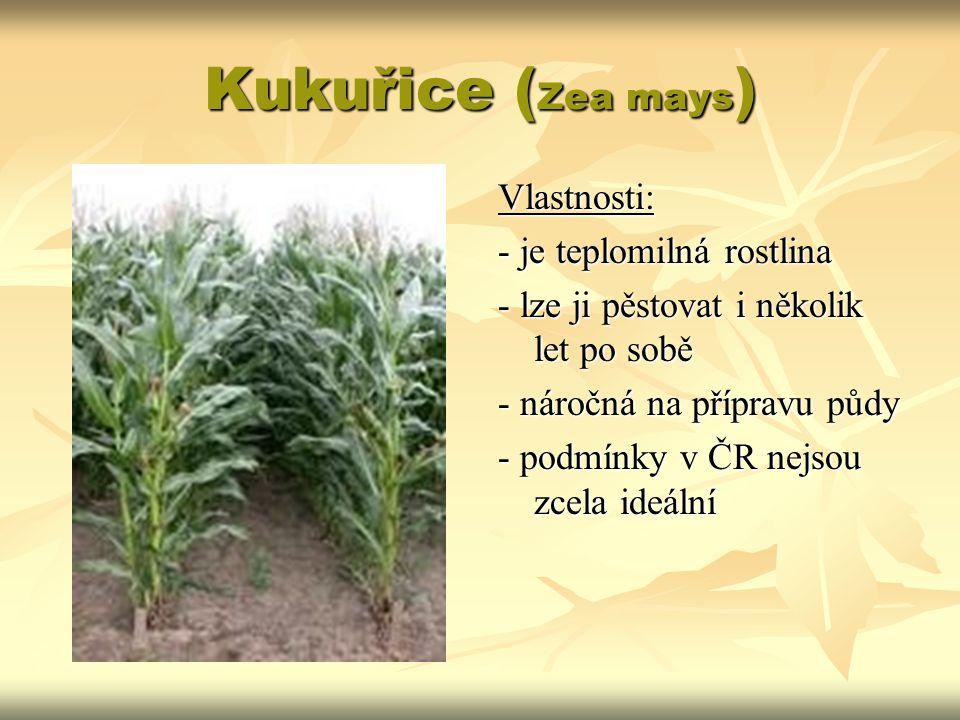 Kukuřice (Zea mays) Vlastnosti: - je teplomilná rostlina
