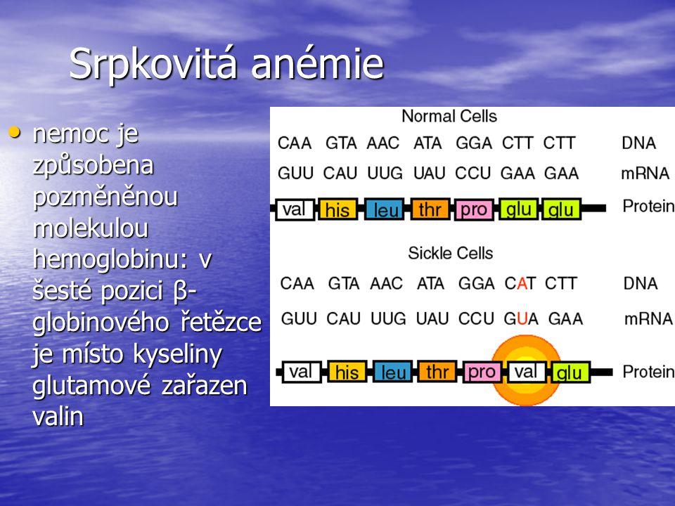 Srpkovitá anémie nemoc je způsobena pozměněnou molekulou hemoglobinu: v šesté pozici β-globinového řetězce je místo kyseliny glutamové zařazen valin.