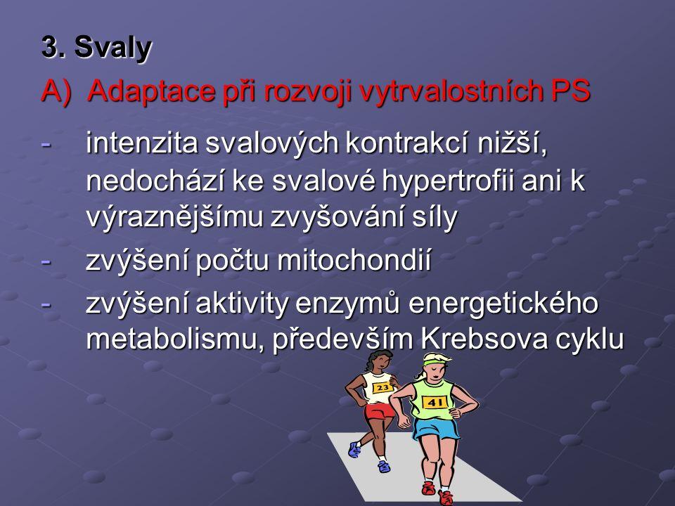 3. Svaly A) Adaptace při rozvoji vytrvalostních PS.