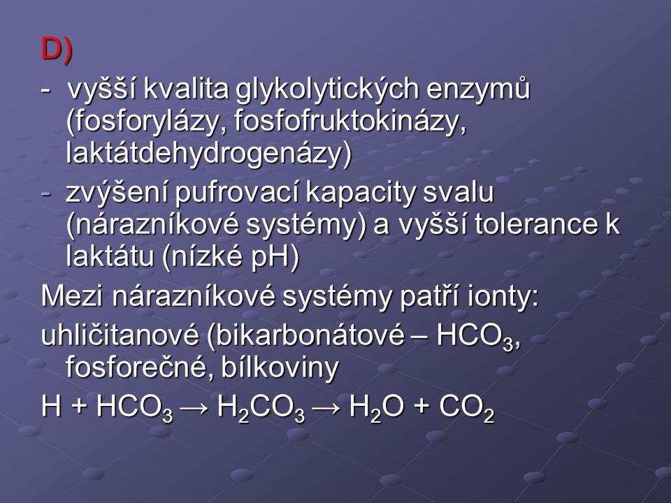 D) - vyšší kvalita glykolytických enzymů (fosforylázy, fosfofruktokinázy, laktátdehydrogenázy)