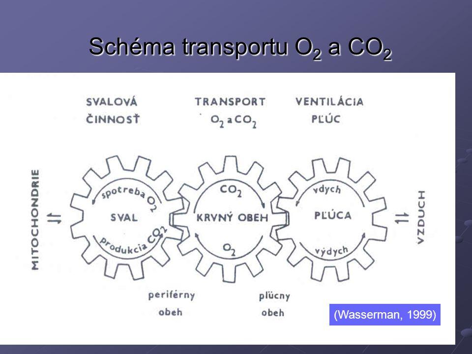 Schéma transportu O2 a CO2