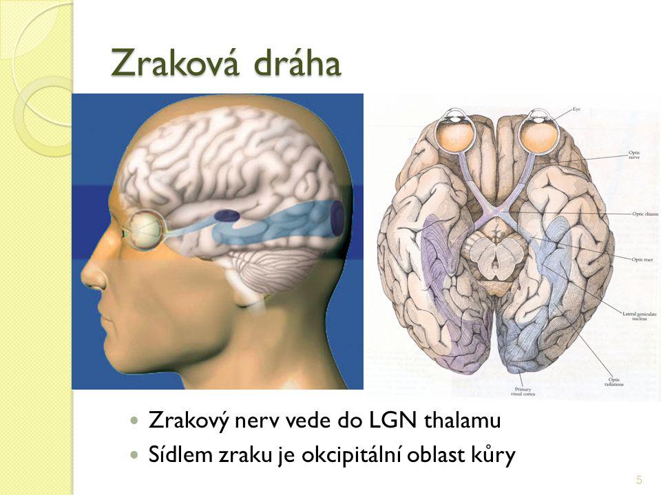 Zraková dráha Zrakový nerv vede do LGN thalamu