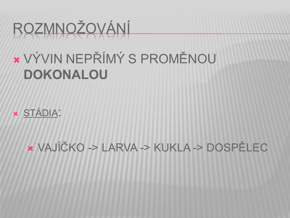 VAJÍČKO -> LARVA -> KUKLA -> DOSPĚLEC