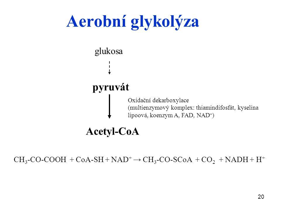 Aerobní glykolýza pyruvát Acetyl-CoA glukosa