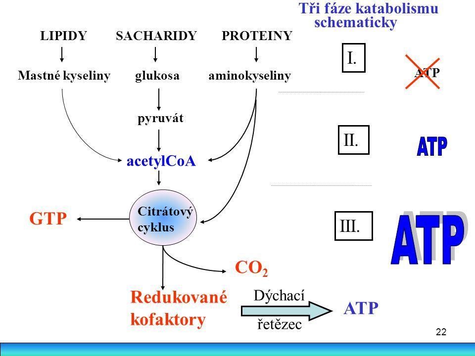 ATP ATP I. II. GTP III. CO2 Redukované kofaktory ATP