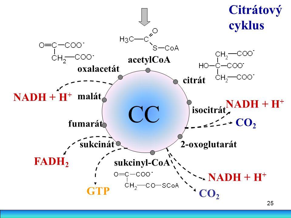 CC Citrátový cyklus NADH + H+ NADH + H+ CO2 FADH2 NADH + H+ GTP CO2