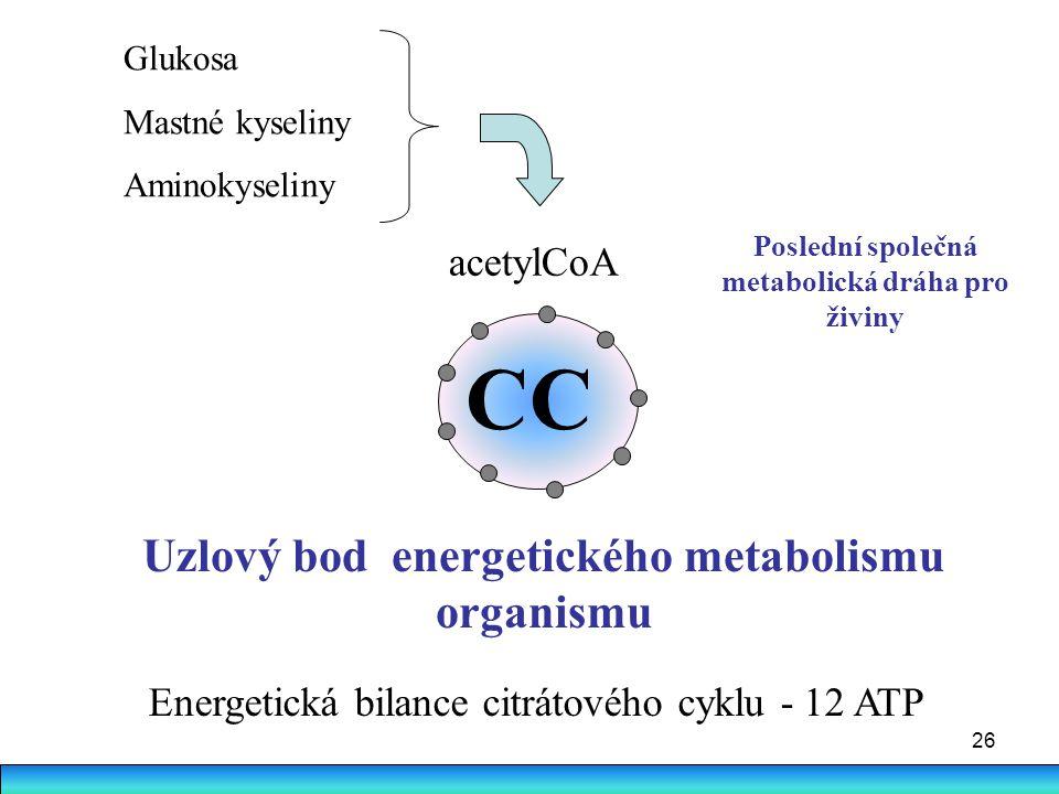 CC Uzlový bod energetického metabolismu organismu acetylCoA