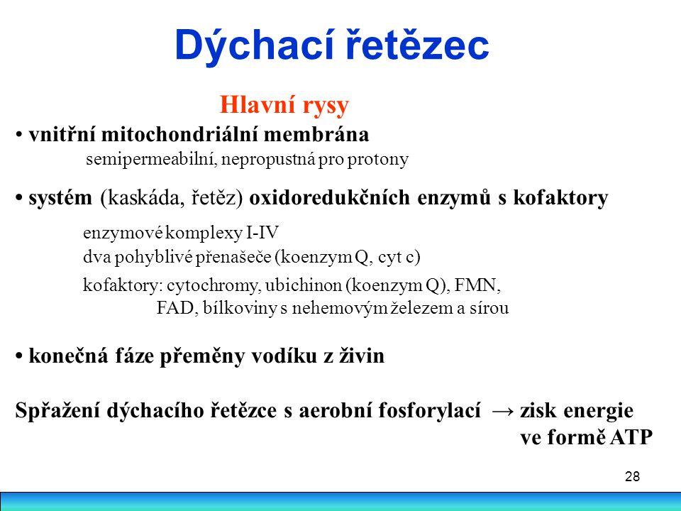 Dýchací řetězec Hlavní rysy • vnitřní mitochondriální membrána