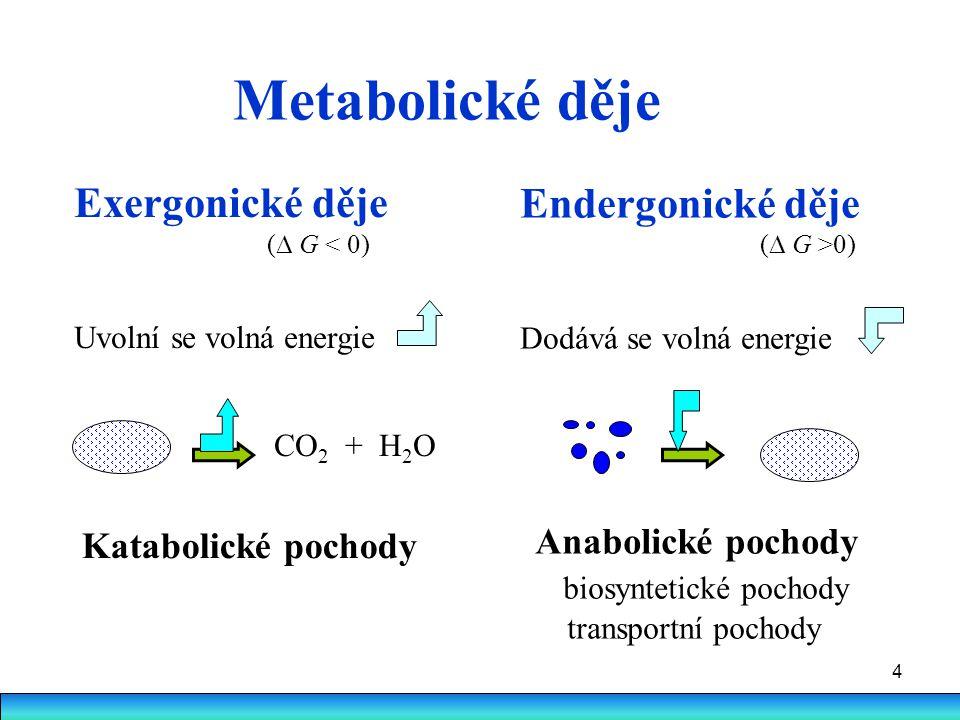 Metabolické děje Exergonické děje Endergonické děje Anabolické pochody