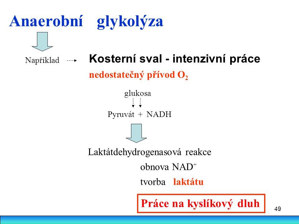 Anaerobní glykolýza Kosterní sval - intenzivní práce