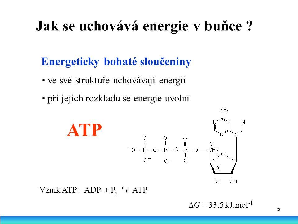 Jak se uchovává energie v buňce