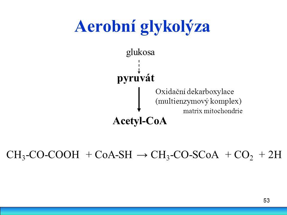 Aerobní glykolýza pyruvát Acetyl-CoA