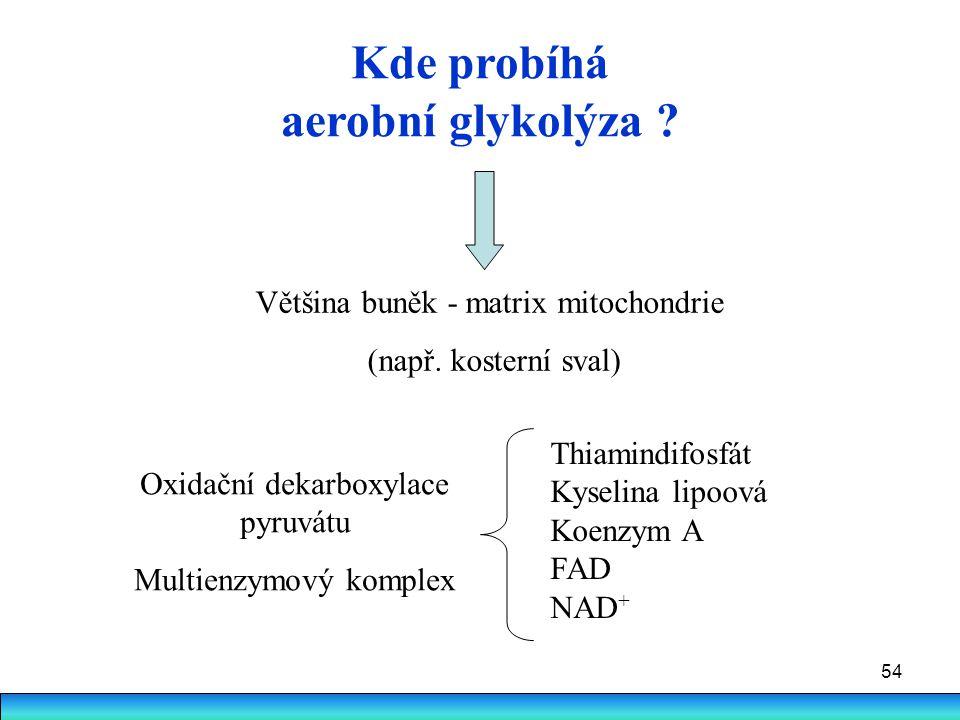 Kde probíhá aerobní glykolýza