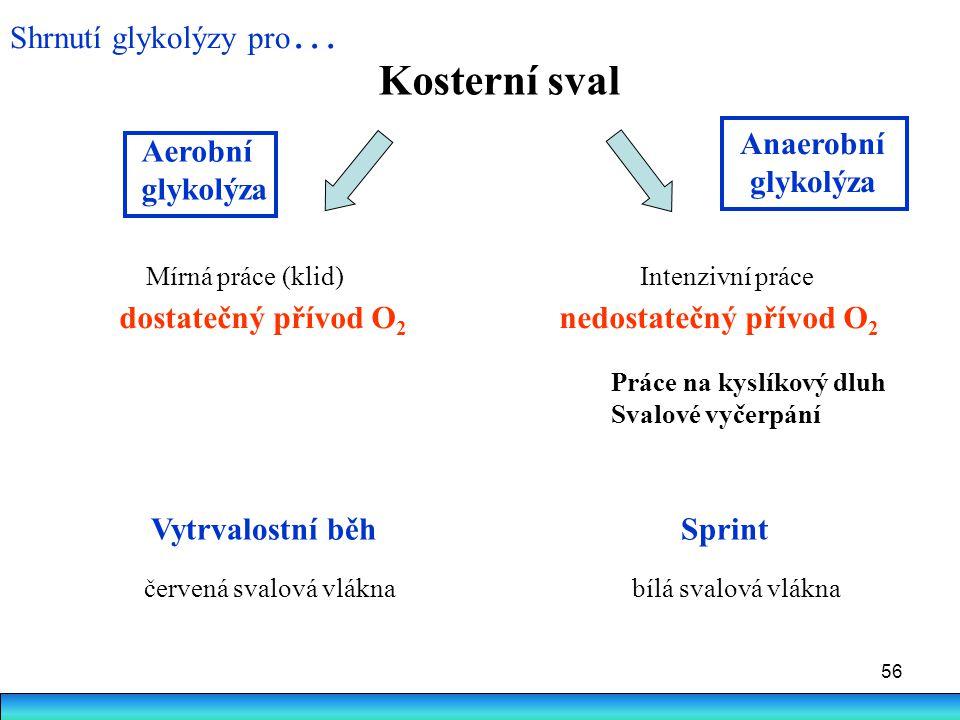 Kosterní sval Shrnutí glykolýzy pro… Anaerobní Aerobní glykolýza