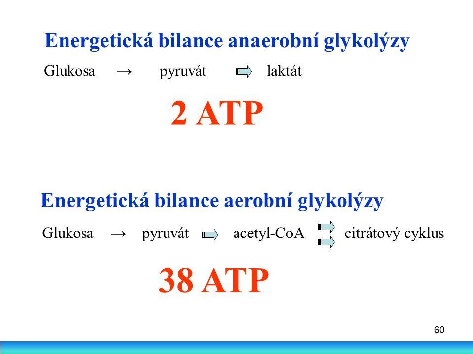 2 ATP 38 ATP Energetická bilance anaerobní glykolýzy
