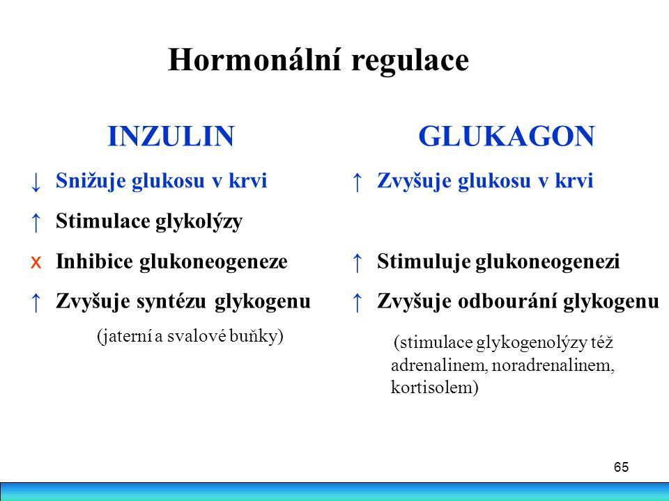Hormonální regulace INZULIN GLUKAGON Snižuje glukosu v krvi