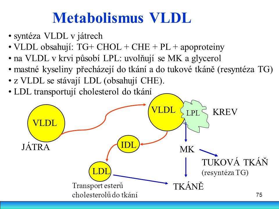 Metabolismus VLDL syntéza VLDL v játrech