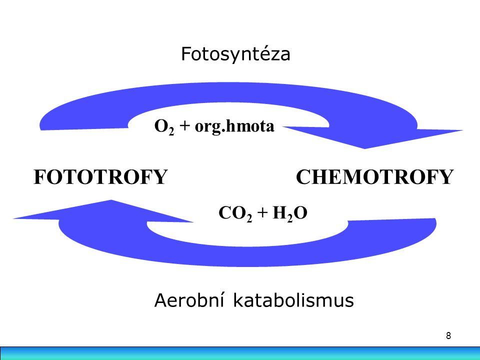 FOTOTROFY CHEMOTROFY Fotosyntéza O2 + org.hmota CO2 + H2O
