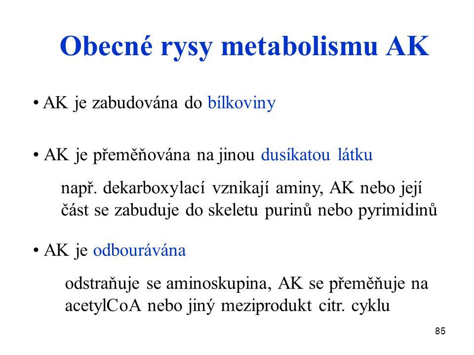 Obecné rysy metabolismu AK
