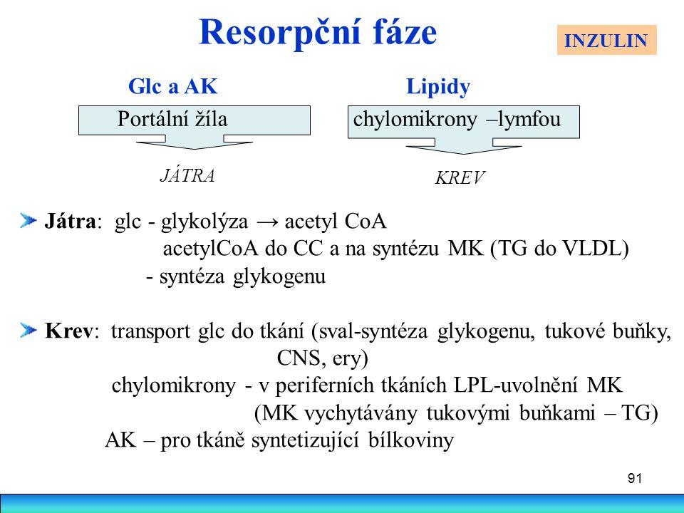 Resorpční fáze Glc a AK Lipidy Portální žíla chylomikrony –lymfou