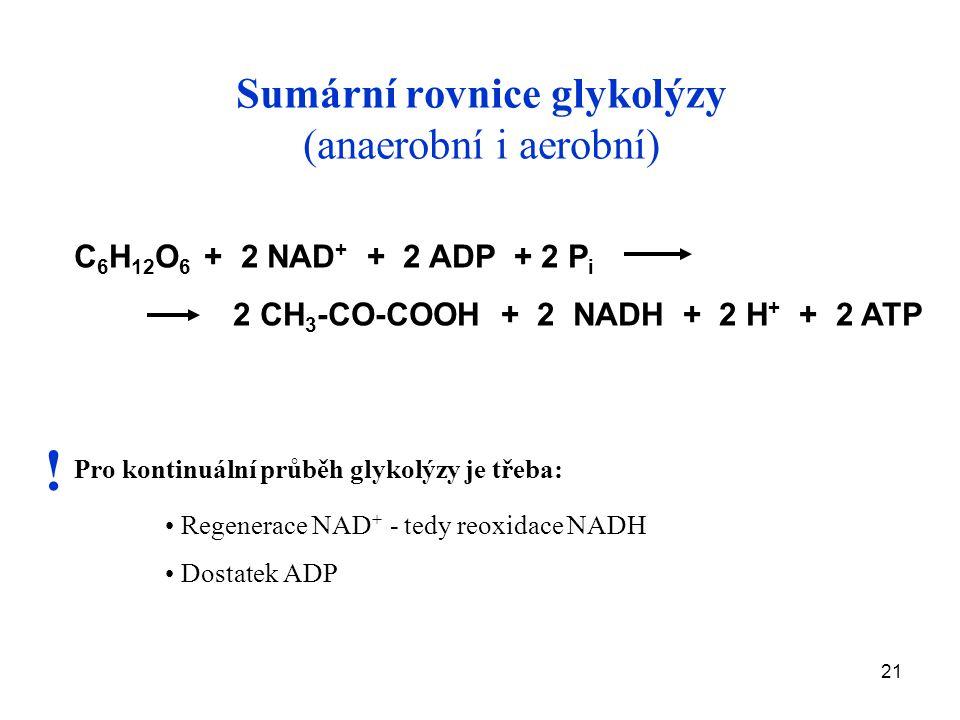 Sumární rovnice glykolýzy (anaerobní i aerobní)
