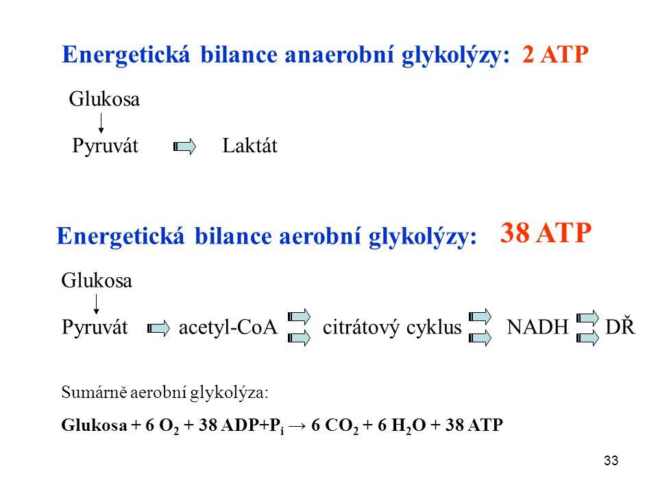 38 ATP Energetická bilance anaerobní glykolýzy: 2 ATP