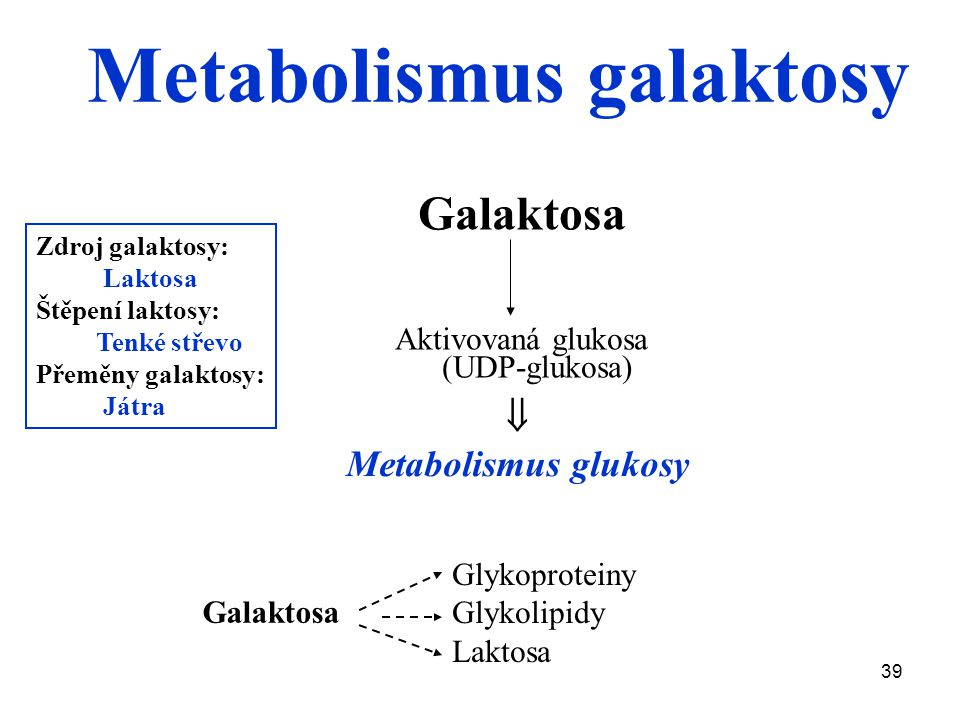Metabolismus galaktosy