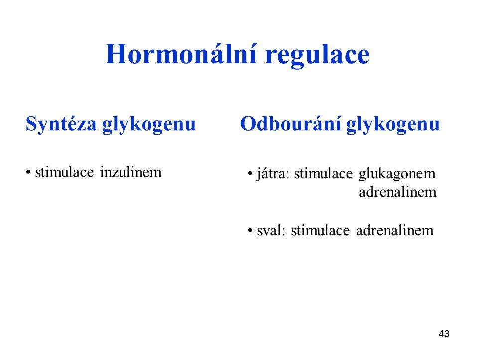 Hormonální regulace Syntéza glykogenu Odbourání glykogenu