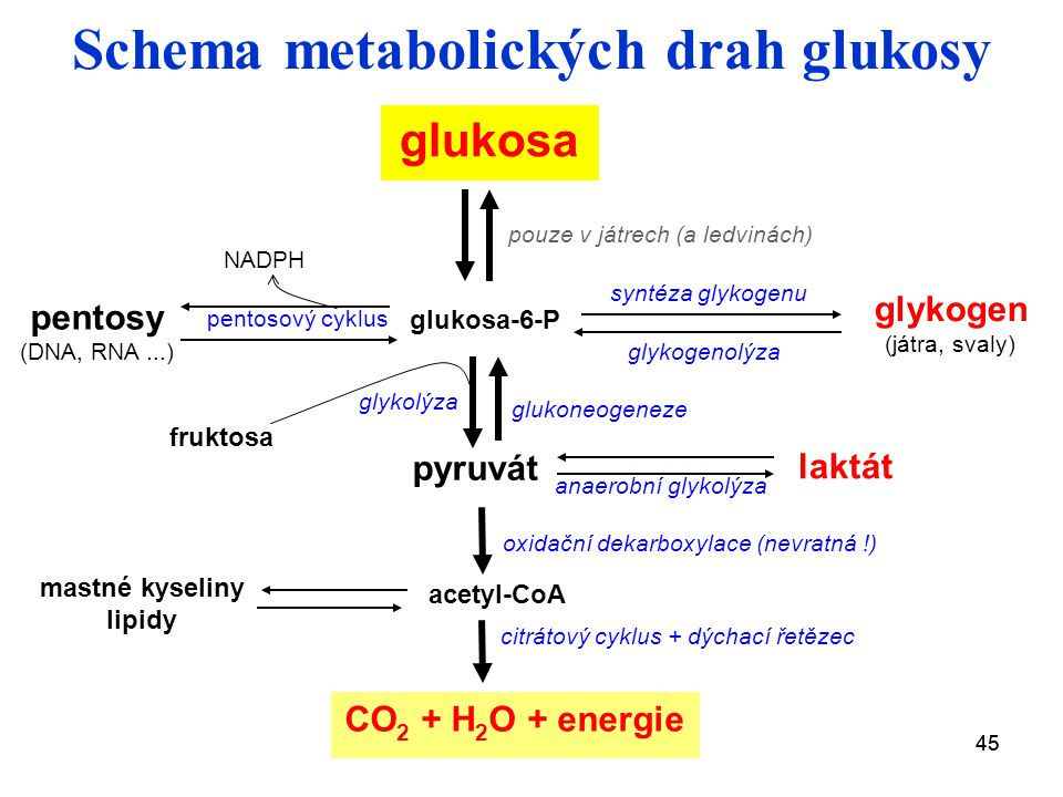 Schema metabolických drah glukosy