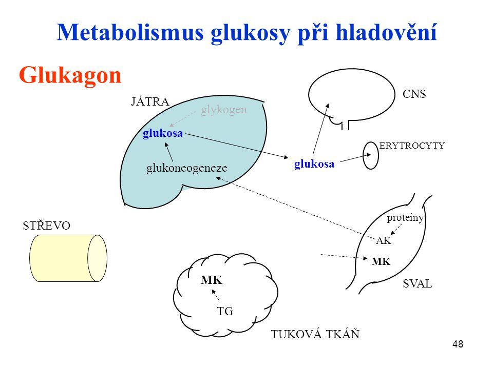 Metabolismus glukosy při hladovění